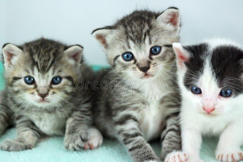 Download Three kittens stock image. Image of cuddly, eyed, newborn - 2405699