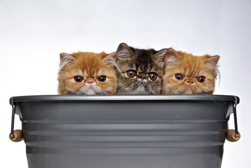 Three Kittens stock photography
