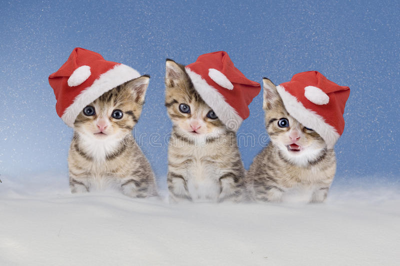 Three kittens with Christmas hats sitting in snow. Three Cats/kittens with Christmas hats sitting in snow stock images
