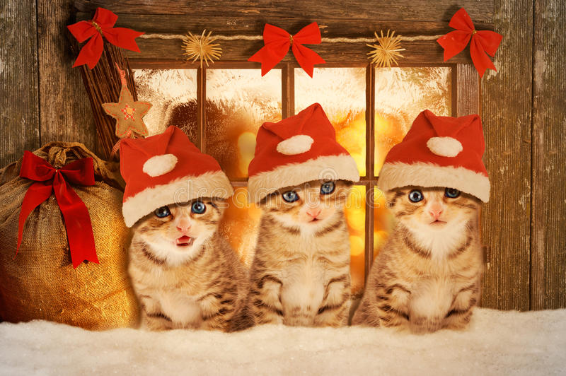 Three kittens at Christmas sitting in front of a window. Three kittens at Christmas sitting in front of a mood-lit window stock image