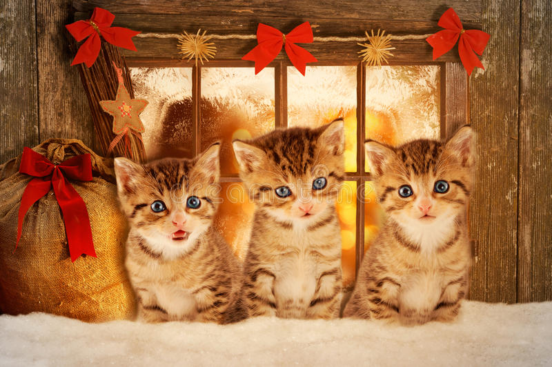 Three kittens at Christmas sitting in front of a window. Three kittens at Christmas sitting in front of a mood-lit window royalty free stock photo