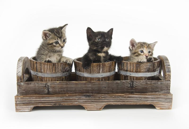 Three kittens in flower pots stock image