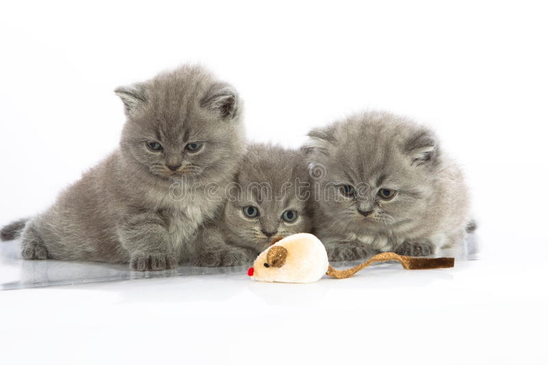 Download Three Kittens With Mouse Toy Stock Photo - Image: 22745542