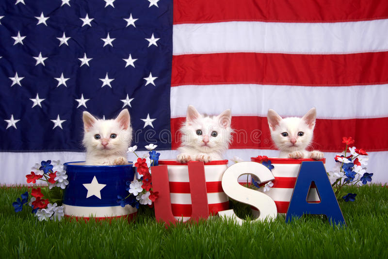 Three kittens in patriotic pots USA blocks Flag background royalty free stock photography