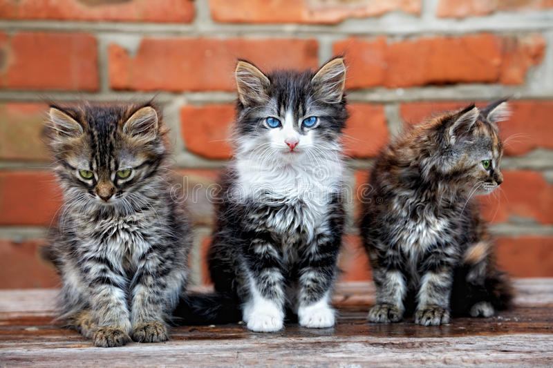 Three kittens on wall background