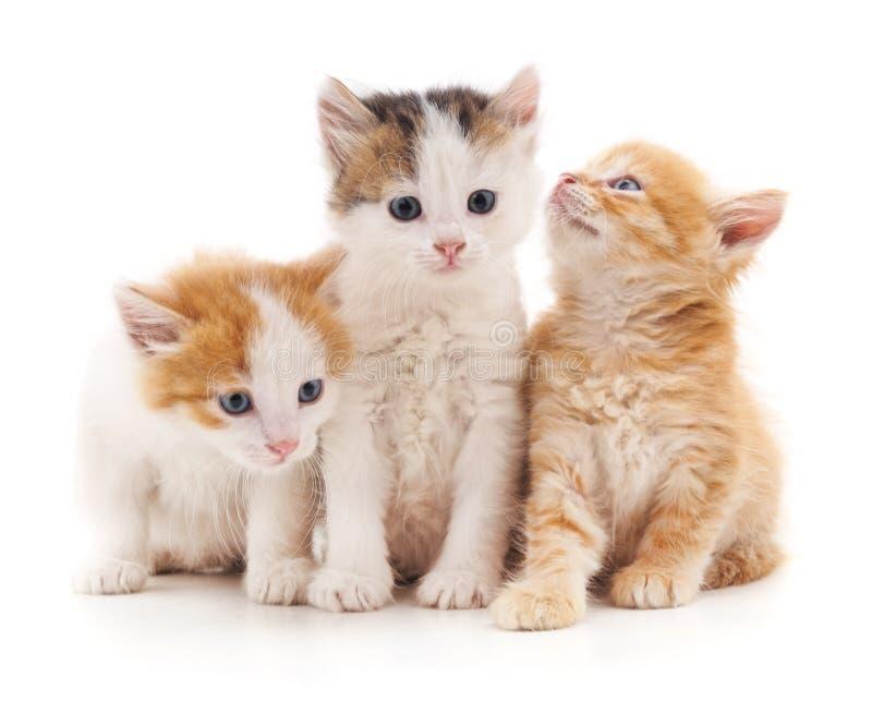 Three kittens. stock photos