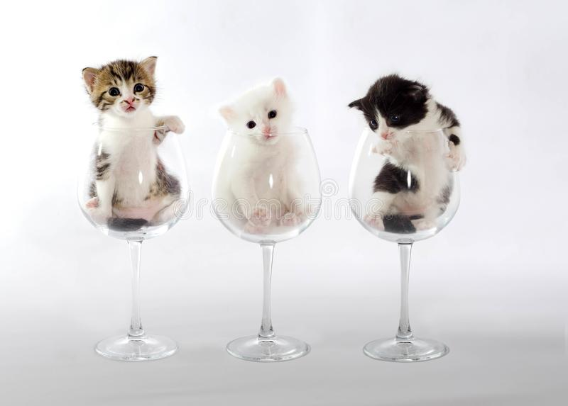 Three kittens in wine glasses on a light background stock images