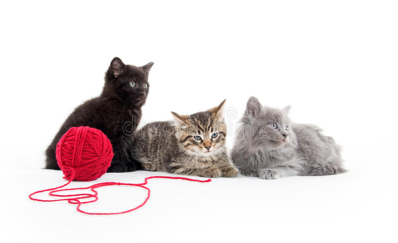 Three kittens and yarn royalty free stock images