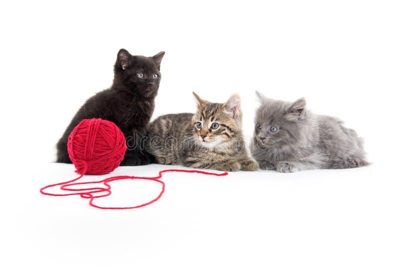 Three kittens and yarn stock photo