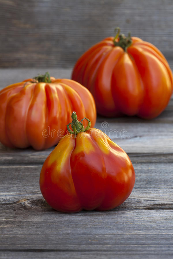 Three large Beefsteak Tomatoes royalty free stock photography