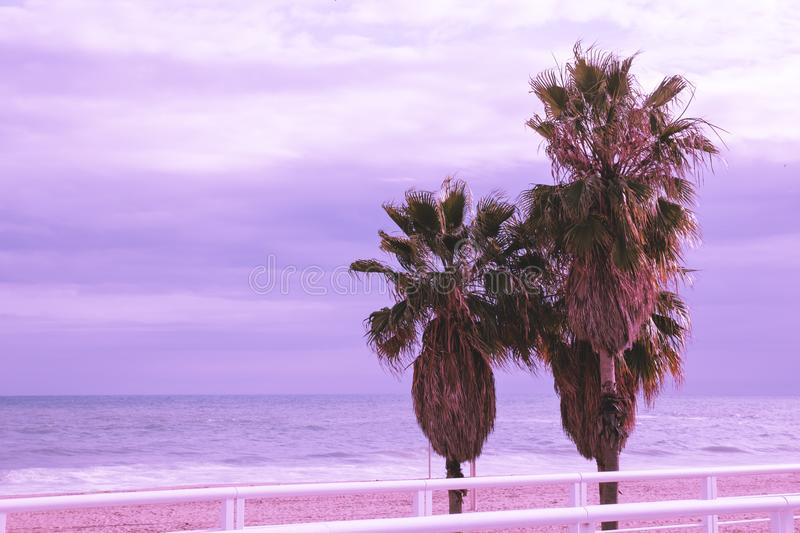 Three large tropical palm trees against the sea and purple sky royalty free stock photography