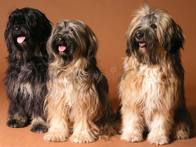 Three laughing dogs stock images