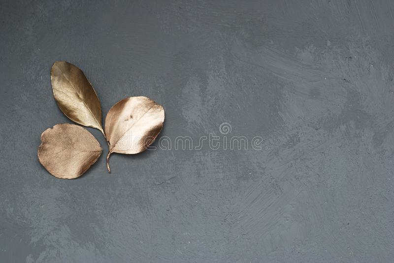 Three Leaves of Eucalyptus Plant in the Corner of Gray Cement Background with Copy space. Top View. stock image