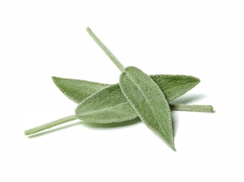 Three leaves of fragrant sage close up. White isolated background.Top view. royalty free stock photos