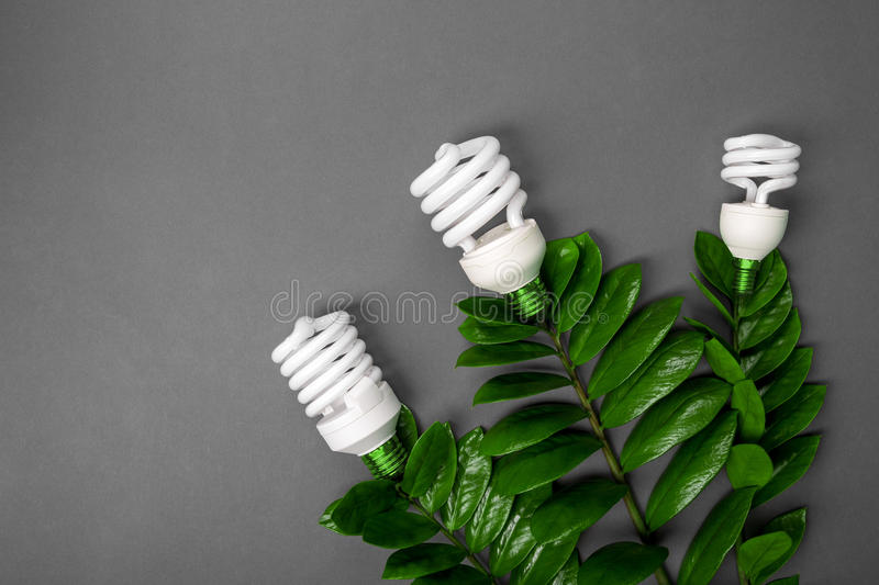 Three LED lamp with green leaf, ECO energy concept, close up. Light bulb on grey background. Saving and Ecological Environment. C stock image
