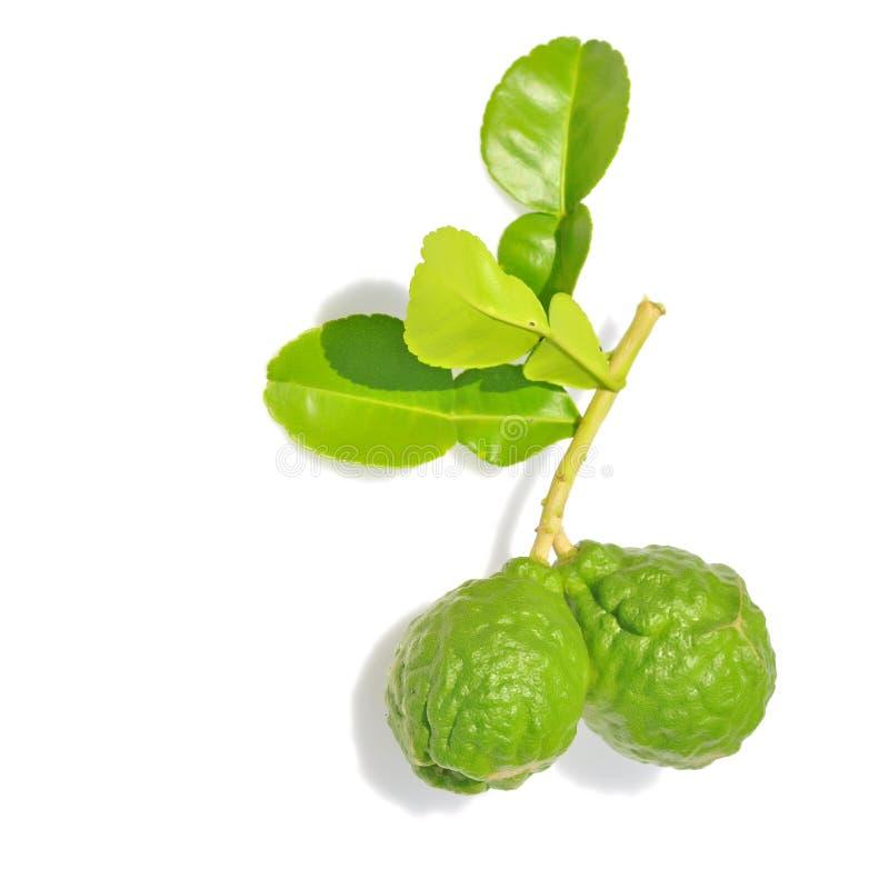 Three leech lime royalty free stock photography