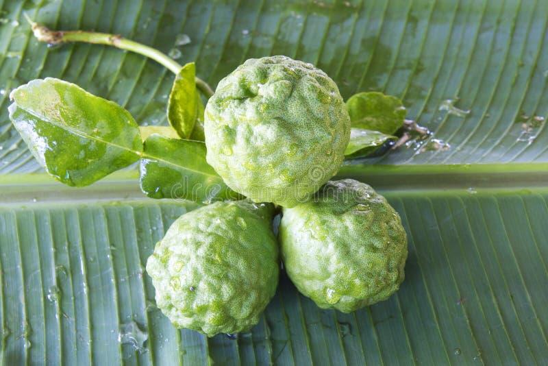 Three Leech Limes royalty free stock photos
