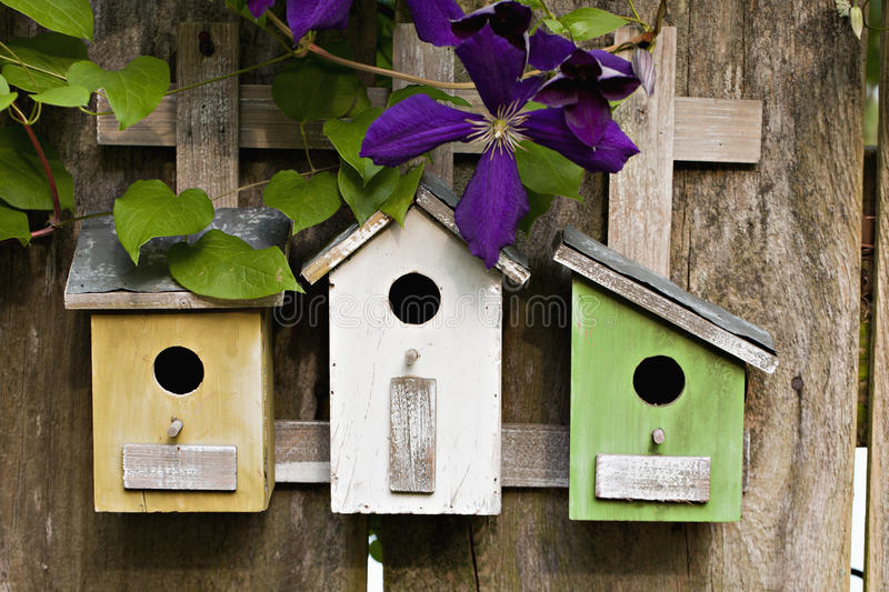 Three little birdhouses with Clematis royalty free stock photo