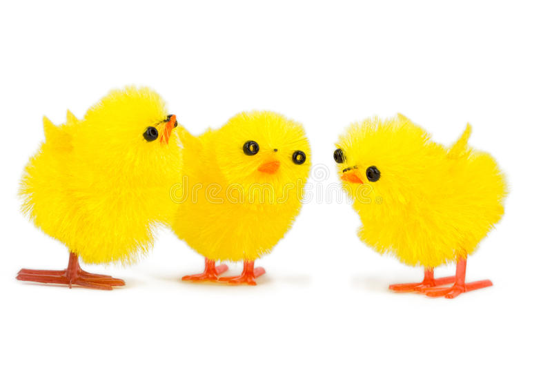 Three little chick brothers. Isolated on white background royalty free stock photo