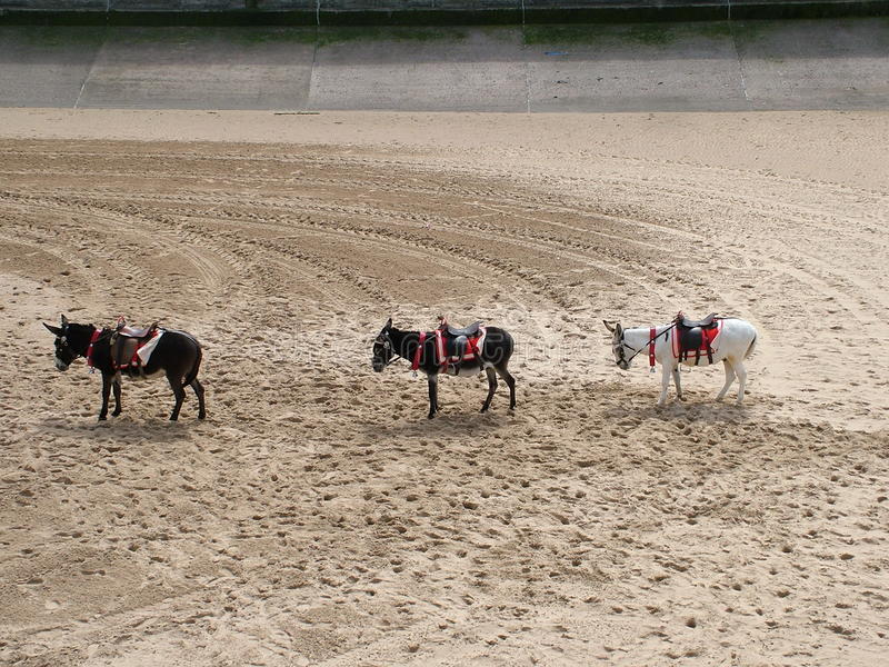 Three little donkeys royalty free stock photo