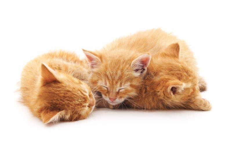 Three little kittens. stock image