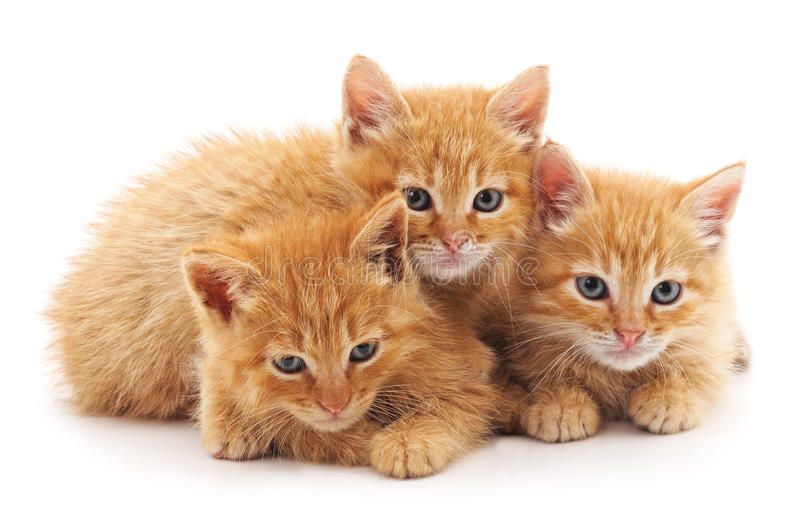 Three little kittens. royalty free stock photography
