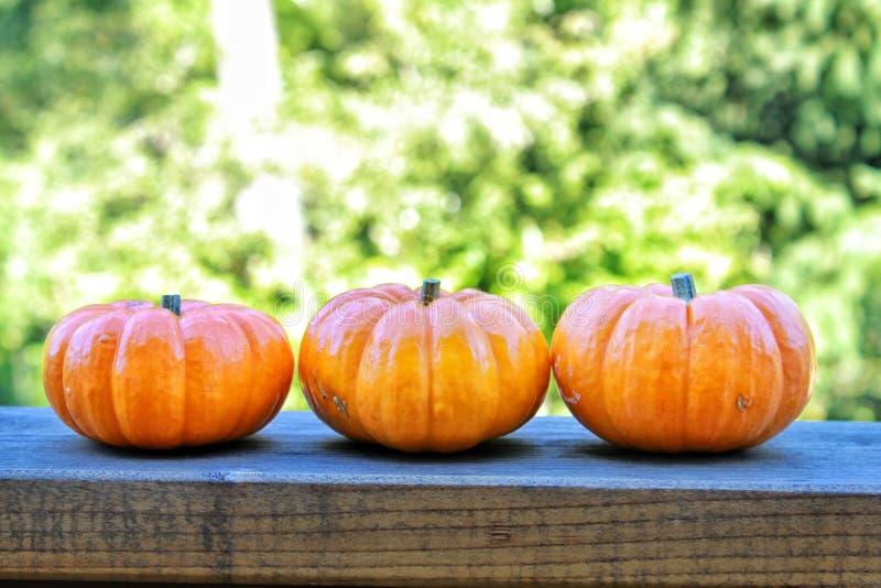 Three little pumpkins royalty free stock image