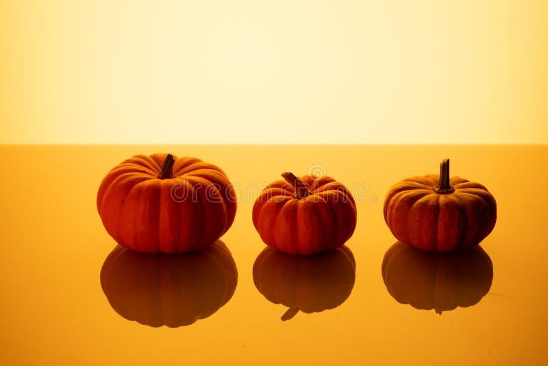 Three little pumpkins orange background royalty free stock photo