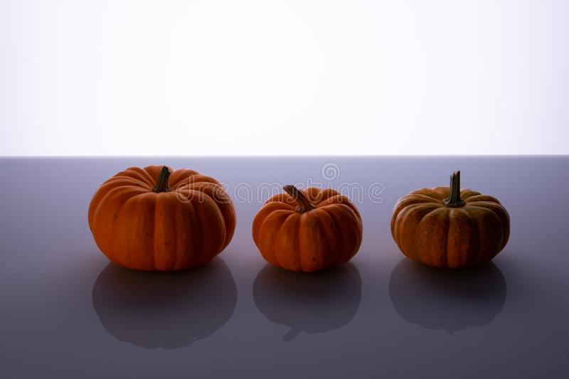 Three little pumpkins on a shiny bottom royalty free stock images