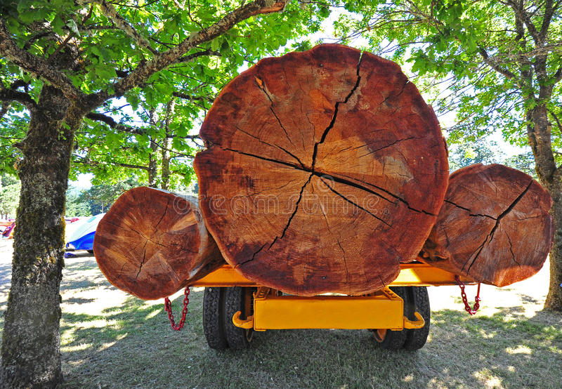 Three logs on back of truck royalty free stock image