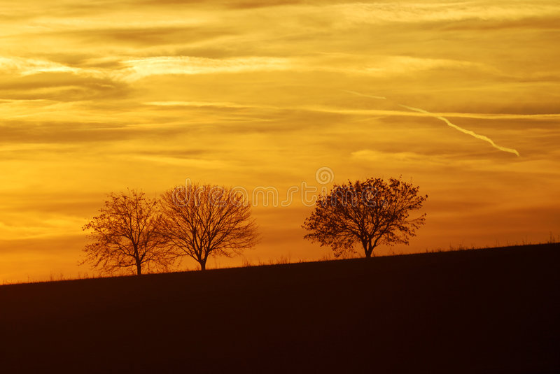 Download Three lonely trees stock image. Image of sunset, idyll - 4150727
