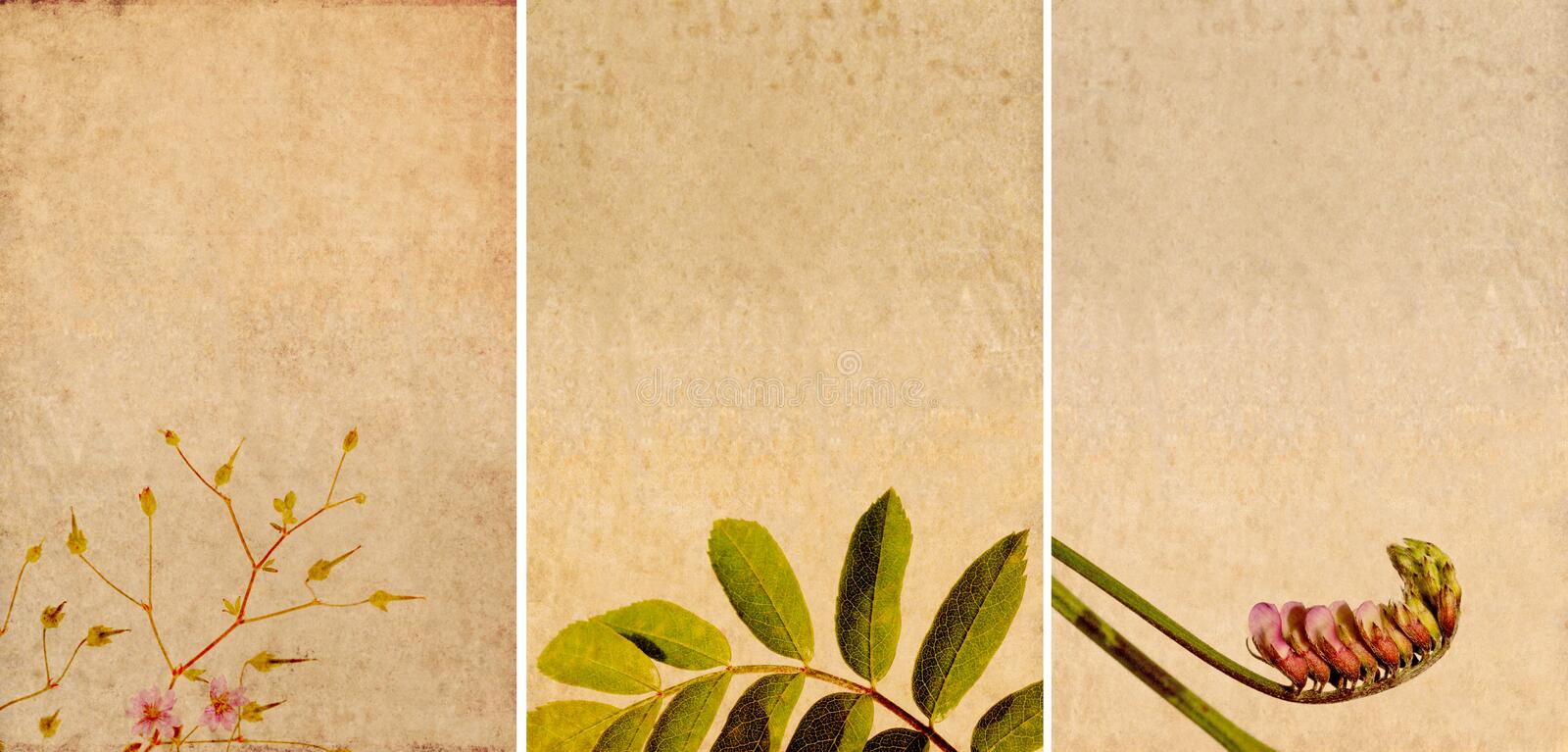 Three lovely background textures vector illustration