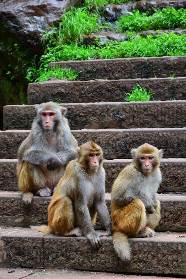 The three lovely monkeys stock image