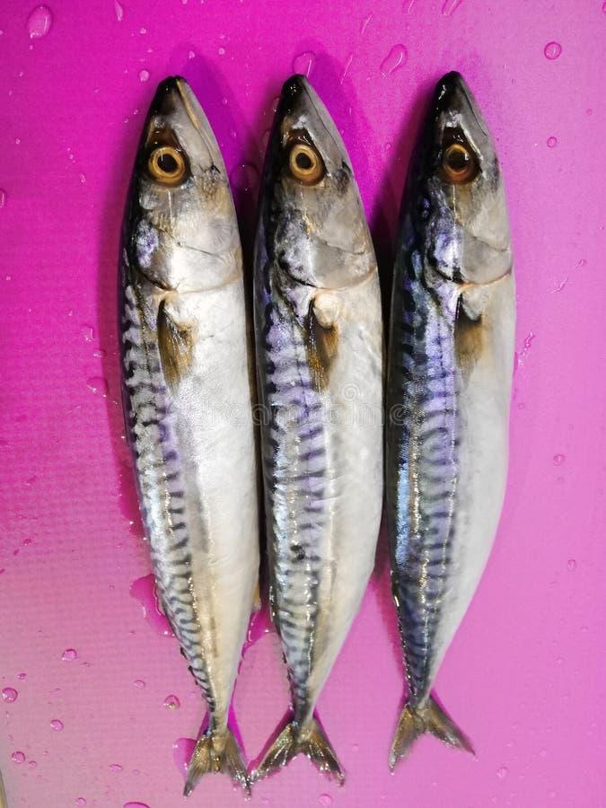 Three mackerel ready for the recipe royalty free stock photo