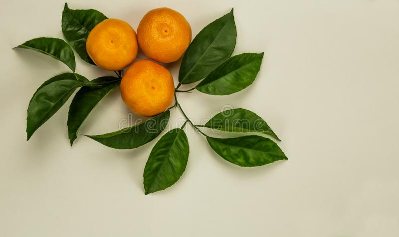Three mandarins with green leaves stock photo