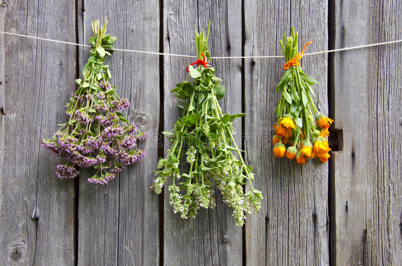 Three medical herbs bunch on old wooden wall stock images