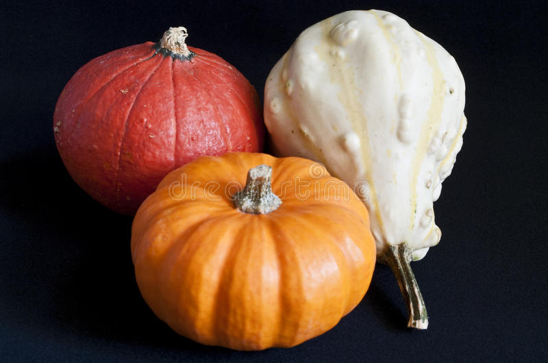Three Mini Pumpkins Royalty Free Stock Photos