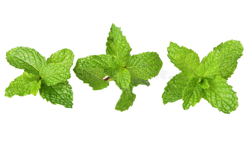 Three mints. Three mint branches in a row for healthy eating border background stock image