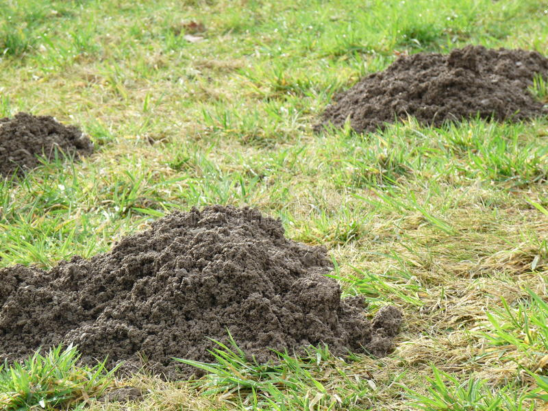 Three Molehill on a meadow royalty free stock image