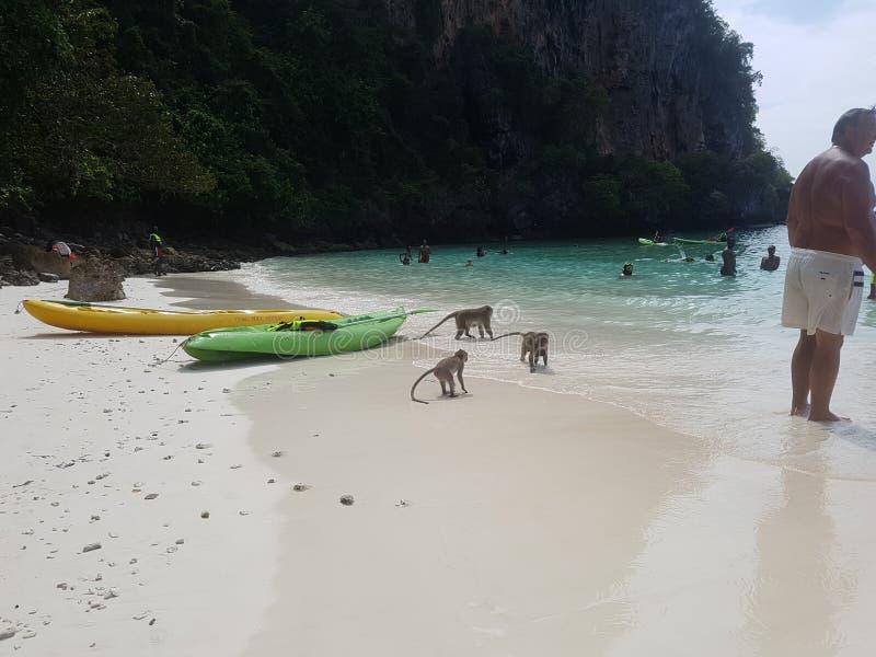 Three monkeys protecting their beach stock photo