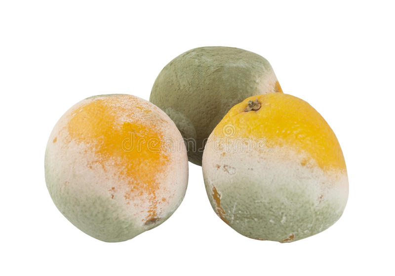 Three mouldy oranges on a white