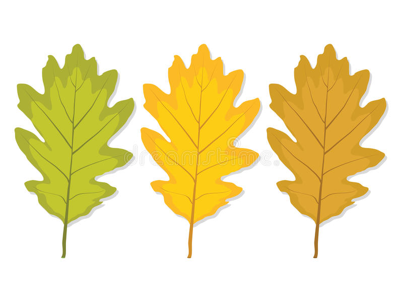 Three multi-colored oak leaf vector illustration