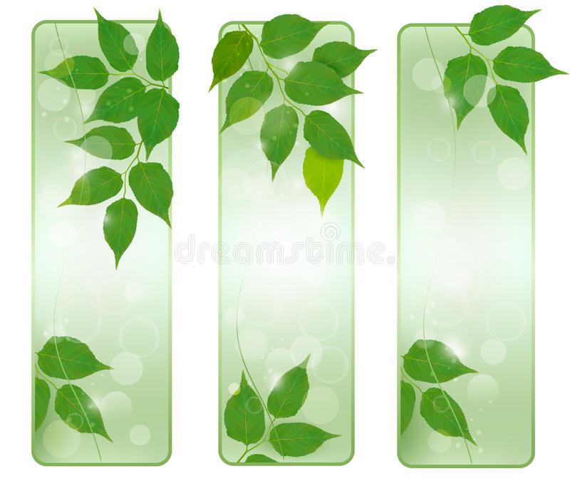 Three nature banners with green fresh leaves stock illustration