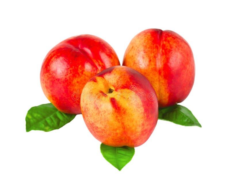 Download Three nectarines stock photo. Image of nektarine, group - 20791358