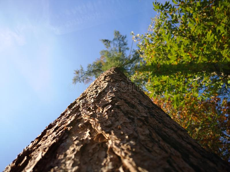 Three. Beautiful big three. A nice day at the woods royalty free stock images