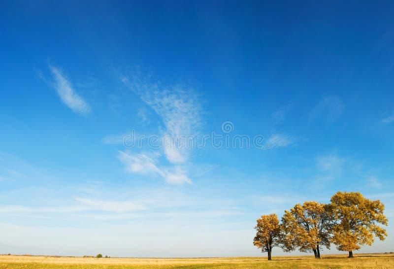 Three oaks royalty free stock photo