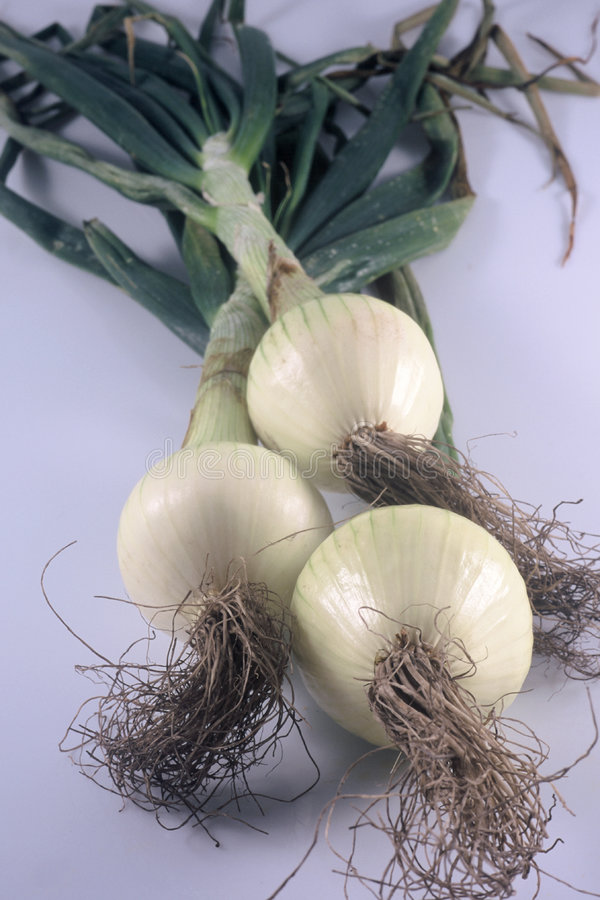 Three Onions. 3 onions with roots royalty free stock photography
