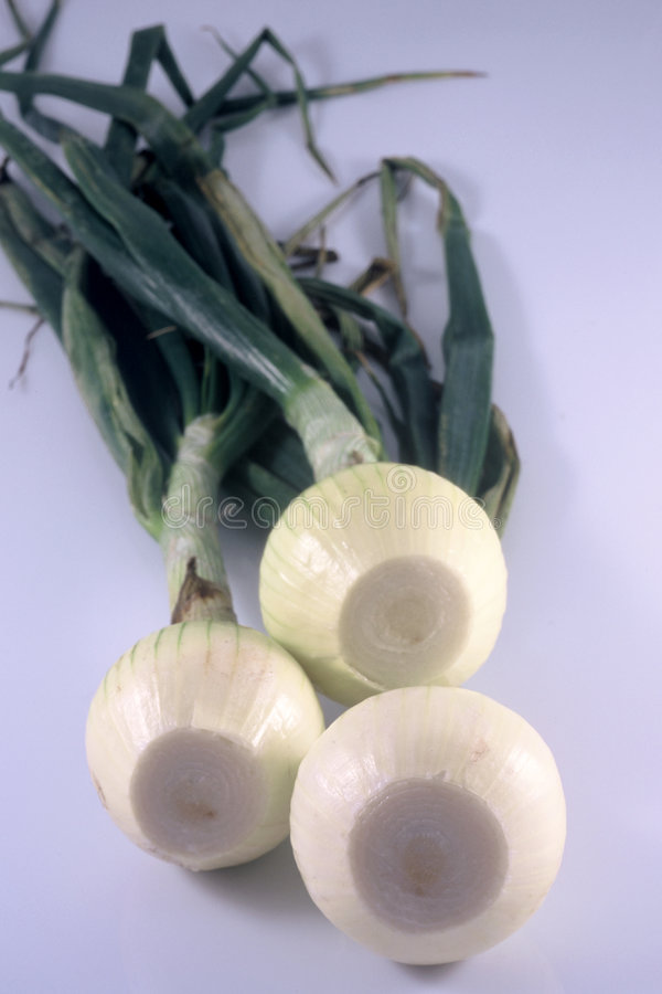 Download Three Onions stock photo. Image of roots, sweet, three, green - 40540