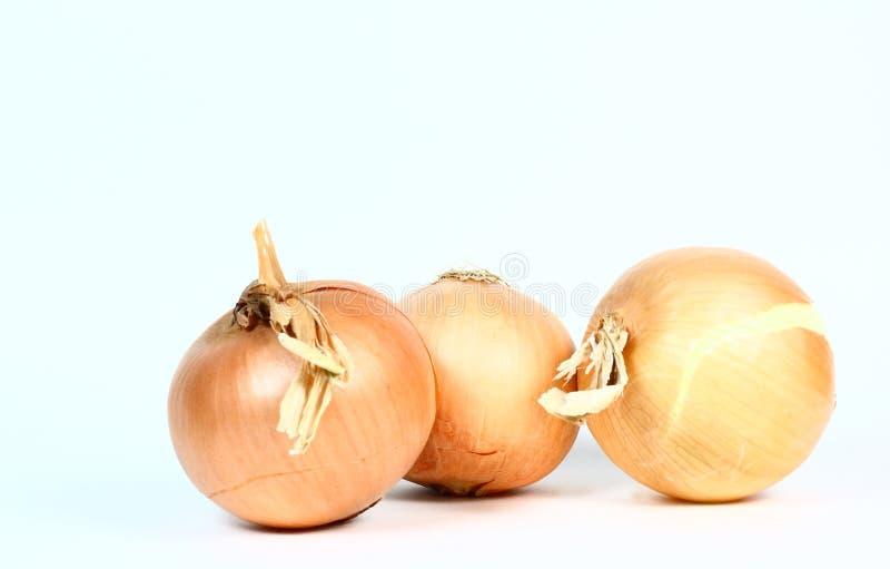 Three Onions royalty free stock photos