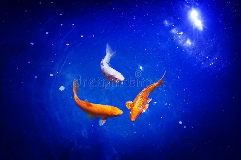 Three orange and white koi carp fishes on blue sea background closeup, goldfish swims in pond at night, moonlight glow shiny stars. Artistic galaxy fantasy royalty free stock images